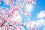 Blütentherapie Foto: © eyetronic @ Fotolia