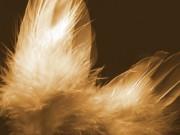 Sensitive Lebensberatung - Balsam für die Seele  Foto: © Sandra Mora @ Fotolia