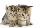Tierkommunikation - Verbindung zu unserem vierbeinigen Partner aufnehmen  Foto: © Tony Campbell @ Fotolia