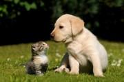 Tierkommunikation - Unterstützung für Mensch und Tier Foto: © Carola Schubbel @ Fotolia