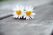 Liebeszauber - Hilfe in Liebesangelegenheiten Foto: © @